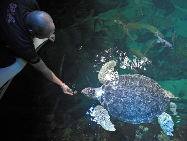 Feed a Green Sea Turtle